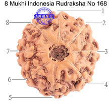 Load image into Gallery viewer, 8 Mukhi Rudraksha from Indonesia - Bead No. 168