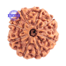 Load image into Gallery viewer, 8 Mukhi Rudraksha from Indonesia - Bead No. 172