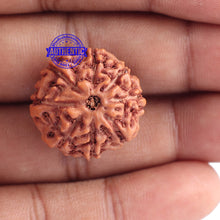 Load image into Gallery viewer, 8 Mukhi Rudraksha from Indonesia - Bead No. 177