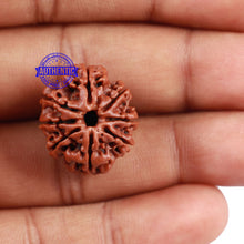 Load image into Gallery viewer, 8 Mukhi Nepalese Rudraksha - Bead No. 131