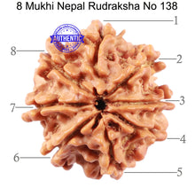 Load image into Gallery viewer, 8 Mukhi Nepalese Rudraksha - Bead No. 138