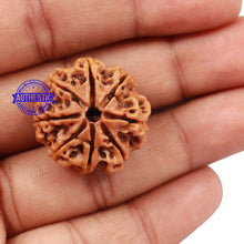 Load image into Gallery viewer, 8 Mukhi Nepalese Rudraksha - Bead No. 105