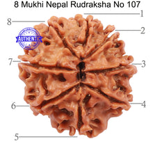 Load image into Gallery viewer, 8 Mukhi Nepalese Rudraksha - Bead No. 107