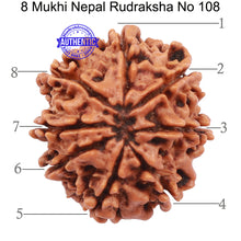 Load image into Gallery viewer, 8 Mukhi Nepalese Rudraksha - Bead No. 108