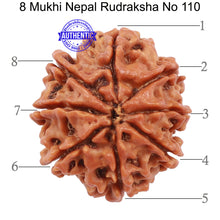 Load image into Gallery viewer, 8 Mukhi Nepalese Rudraksha - Bead No. 110