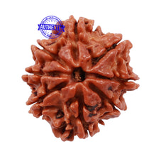 Load image into Gallery viewer, 8 Mukhi Nepalese Rudraksha - Bead No. 113