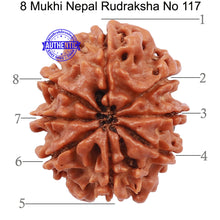 Load image into Gallery viewer, 8 Mukhi Nepalese Rudraksha - Bead No. 117