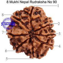 Load image into Gallery viewer, 8 Mukhi Nepalese Rudraksha - Bead No. 90