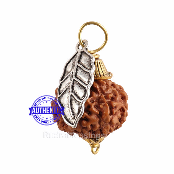 7 Mukhi Rudraksha from Indonesia - Bead No. 12 (with leaf accessory)