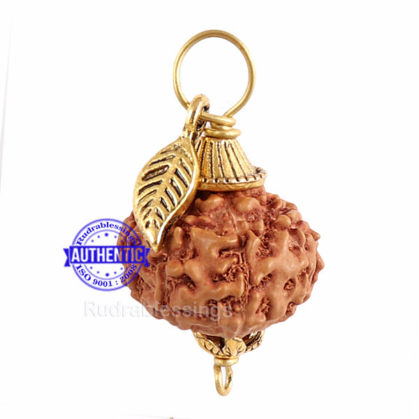 10 Mukhi Rudraksha from Indonesia - Bead No. 136 (with leaf accessory)