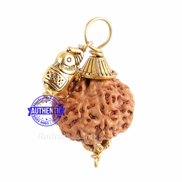 7 Mukhi Rudraksha from Indonesia - Bead No. 7  (with elephant accessory)