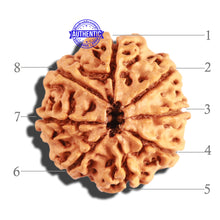 Load image into Gallery viewer, 8 Mukhi Nepalese Rudraksha - Bead No. 161