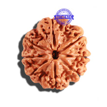 Load image into Gallery viewer, 8 Mukhi Nepalese Rudraksha - Bead No. 168