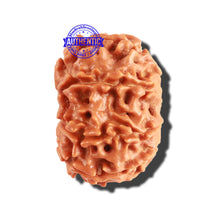 Load image into Gallery viewer, 8 Mukhi Nepalese Rudraksha - Bead No. 175