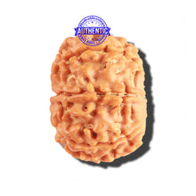 Load image into Gallery viewer, 8 Mukhi Nepalese Rudraksha - Bead No. 181