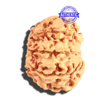 Load image into Gallery viewer, 8 Mukhi Nepalese Rudraksha - Bead No. 182