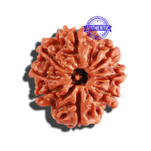 Load image into Gallery viewer, 8 Mukhi Nepalese Rudraksha - Bead No. 204