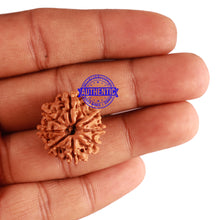 Load image into Gallery viewer, 8 Mukhi Nepalese Rudraksha - Bead No. 212