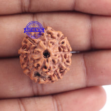 Load image into Gallery viewer, 9 Mukhi Rudraksha from Indonesia - Bead No. 167