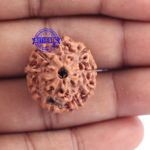 9 Mukhi Rudraksha from Indonesia - Bead No. 167