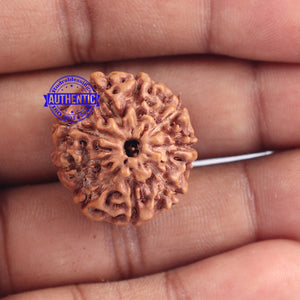 9 Mukhi Rudraksha from Indonesia - Bead No. 169