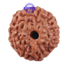 Load image into Gallery viewer, 9 Mukhi Rudraksha from Indonesia - Bead No. 217