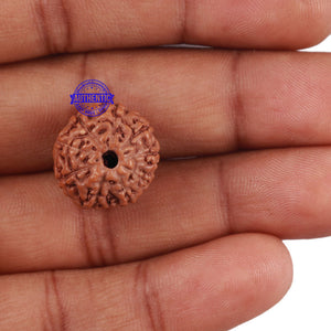 9 Mukhi Rudraksha from Indonesia - Bead No. 217
