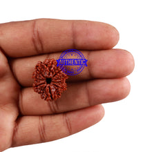 Load image into Gallery viewer, 9 Mukhi Nepalese Rudraksha - Bead No. 148