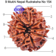 Load image into Gallery viewer, 9 Mukhi Nepalese Rudraksha - Bead No. 154