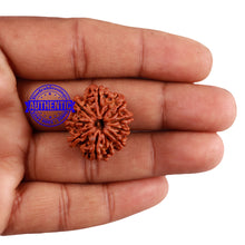 Load image into Gallery viewer, 9 Mukhi Nepalese Rudraksha - Bead No. 15