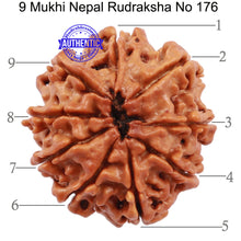 Load image into Gallery viewer, 9 Mukhi Nepalese Rudraksha - Bead No. 176