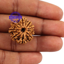 Load image into Gallery viewer, 9 Mukhi Nepalese Rudraksha - Bead No. 139