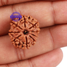 Load image into Gallery viewer, 9 Mukhi Nepalese Rudraksha - Bead No 200