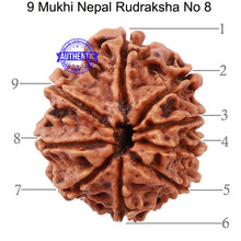 Load image into Gallery viewer, 9 Mukhi Nepalese Rudraksha - Bead No 8
