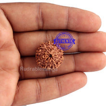 Load image into Gallery viewer, 9 Mukhi Rudraksha from Indonesia - Bead No. 183 (Gold Plated Bracket)