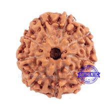 Load image into Gallery viewer, 9 Mukhi Rudraksha from Indonesia - Bead No. 186 (Gold Plated Bracket)