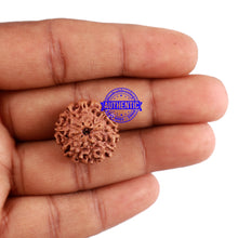 Load image into Gallery viewer, 9 Mukhi Rudraksha from Indonesia - Bead No. 48