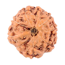 Load image into Gallery viewer, 9 Mukhi Rudraksha from Indonesia - Bead No. 70