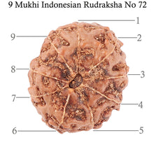 Load image into Gallery viewer, 9 Mukhi Rudraksha from Indonesia - Bead No. 72