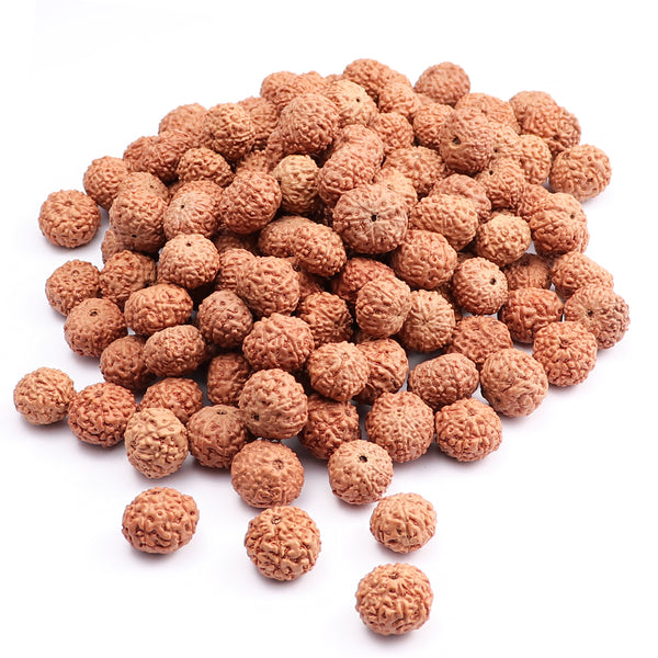 9 Mukhi Rudraksha from Indonesia - 100 Beads Pack