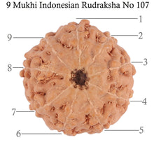 Load image into Gallery viewer, 9 Mukhi Rudraksha from Indonesia - Bead No. 107