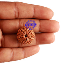 Load image into Gallery viewer, 9 Mukhi Nepalese Rudraksha - Bead No. 235