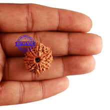 Load image into Gallery viewer, 9 Mukhi Nepalese Rudraksha - Bead No. 240