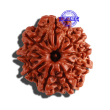 Load image into Gallery viewer, 9 Mukhi Nepalese Rudraksha - Bead No. 276
