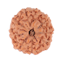 Load image into Gallery viewer, 9 Mukhi Rudraksha from Indonesia - Bead No. 98
