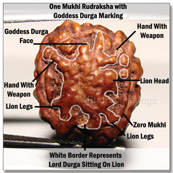 One Mukhi Rudraksha with Goddess Durga Marking
