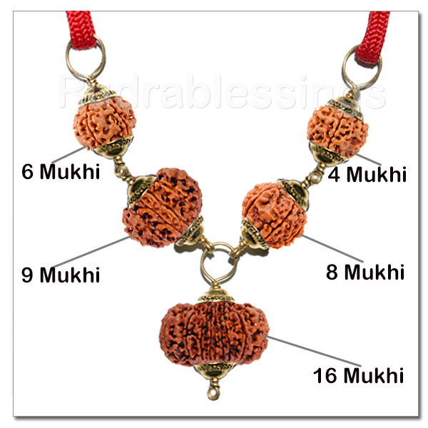 Rudraksha For Highly Competitive Exams From Nepal