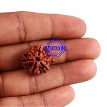 Load image into Gallery viewer, Nepalese Ganesh Rudraksha - Bead No. 104