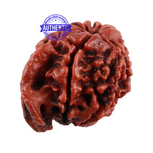 Load image into Gallery viewer, Nepalese Ganesh Rudraksha - Bead No. 105