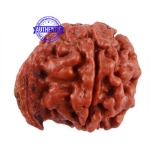Load image into Gallery viewer, Nepalese Ganesh Rudraksha - Bead No. 107